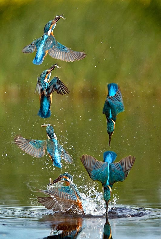 Kingfisher A Beautiful Message For You Today Everything Matters A Feng Shui Way To Look At Life